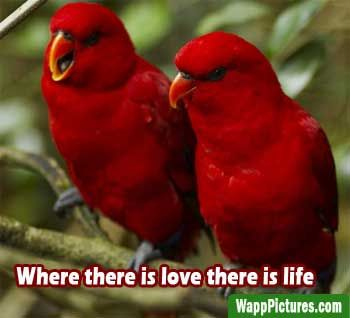 Beautiful Love Birds Images Free Download Wapppictures Com Most Beautiful Birds Colorful Birds Birds Wallpaper Hd