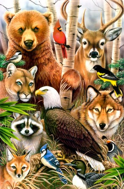 No more animal cruelty in paradise!!! :') Thank you Jehovah!!!   North  american animals, American animals, Animal drawings