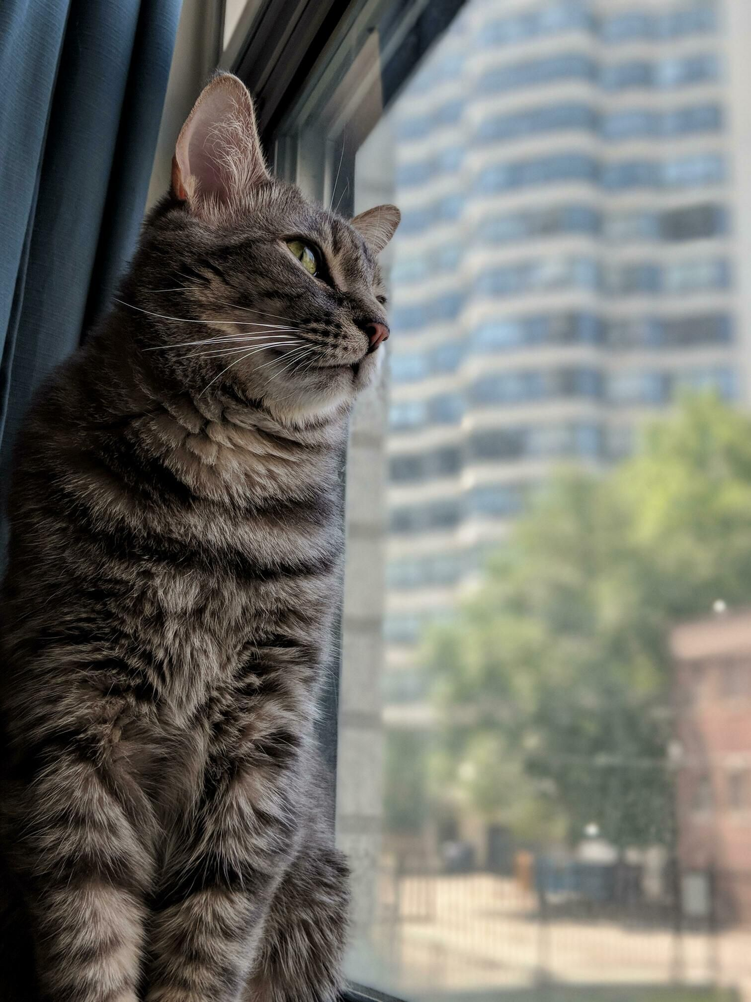 My boy, watching the birds fly by  | Animals | Cats, Cats