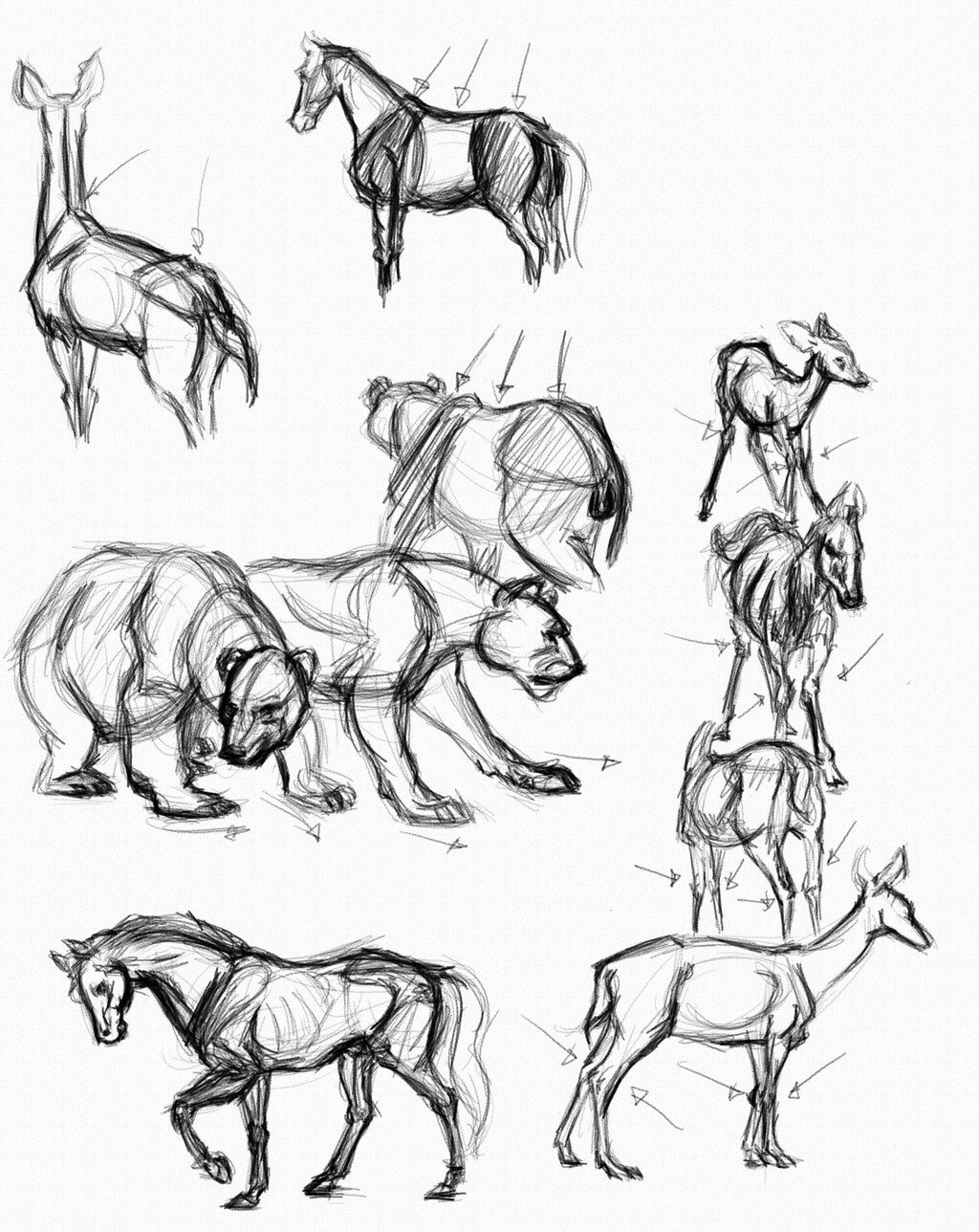 Simple animal anatomy