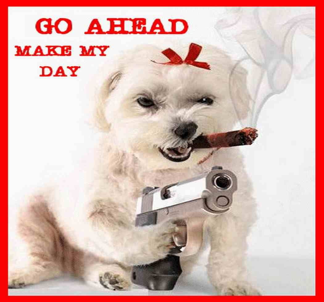 Funny animal pics with words funny animals with guns - Funny animal pictures with words ...