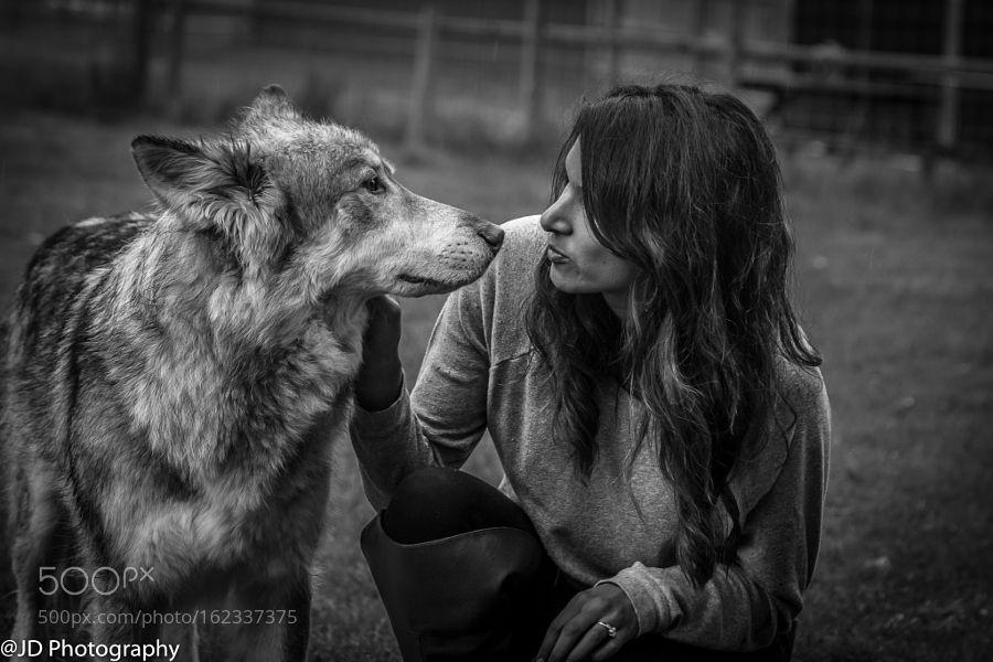 Wolf dogs meets beautiful woman by janedobbs