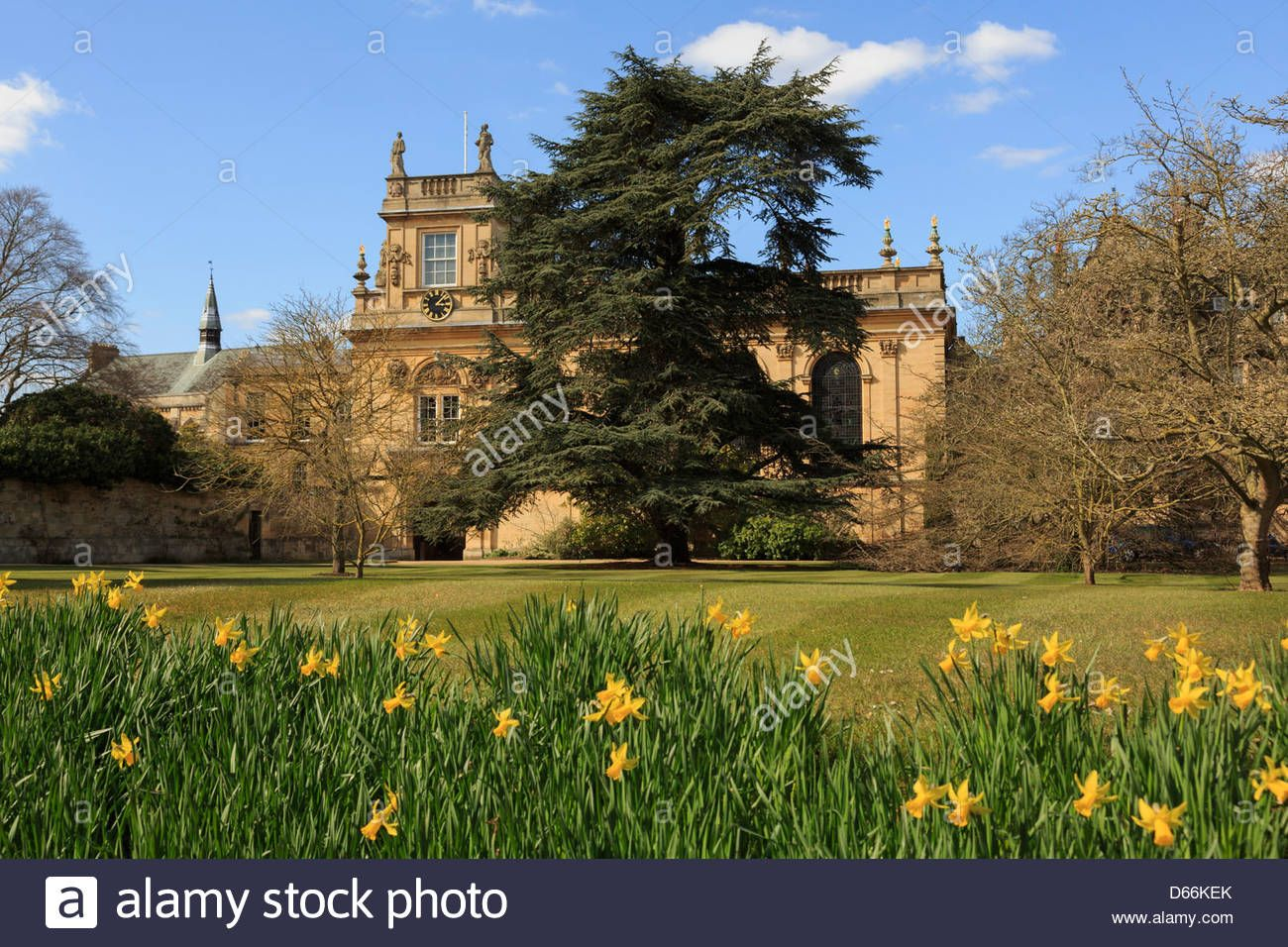 Daffodils In Trinity College Front Quadrangle Garden With