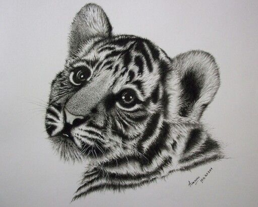 Tigre Sketch: Baby Tiger Cub Drawing