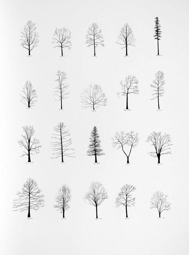 Trees of the USA III