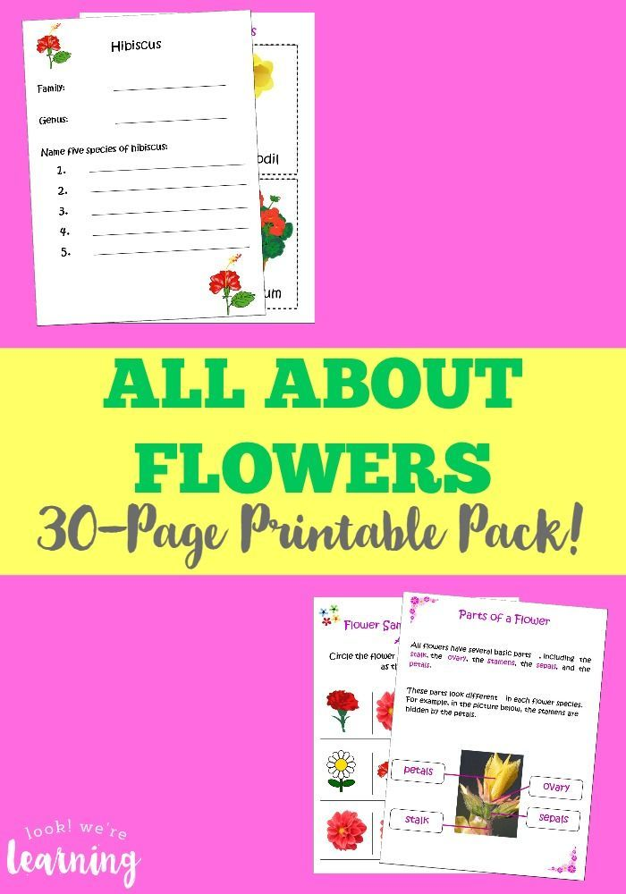 All About Flowers Printable Unit Study For Kids Kid Blogger