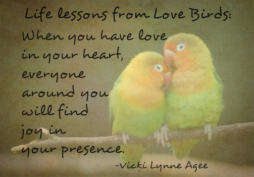 Life Lessons From Love Birds When You Have Love In Your Heart Everyone Around You Will Find Joy In Your Presence Vi Love Birds Quotes Bird Quotes Finding Joy
