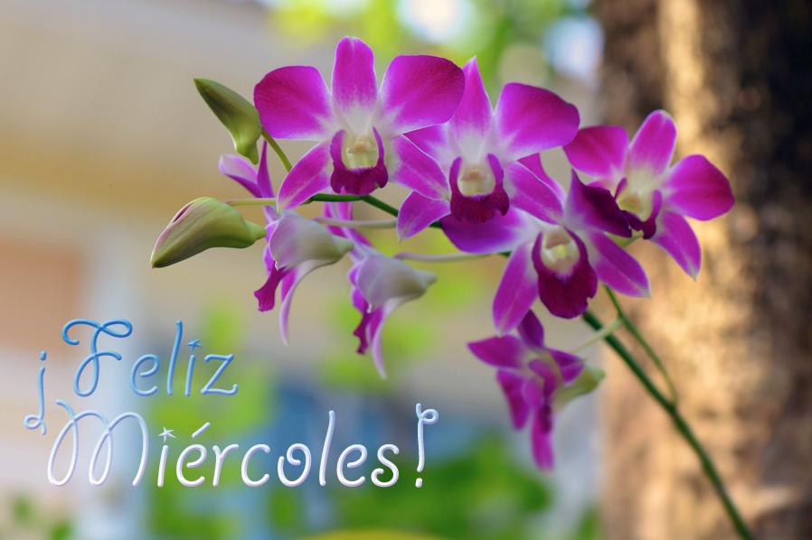 flores,de,mi,jardin,orquideas,feliz,miercoles.