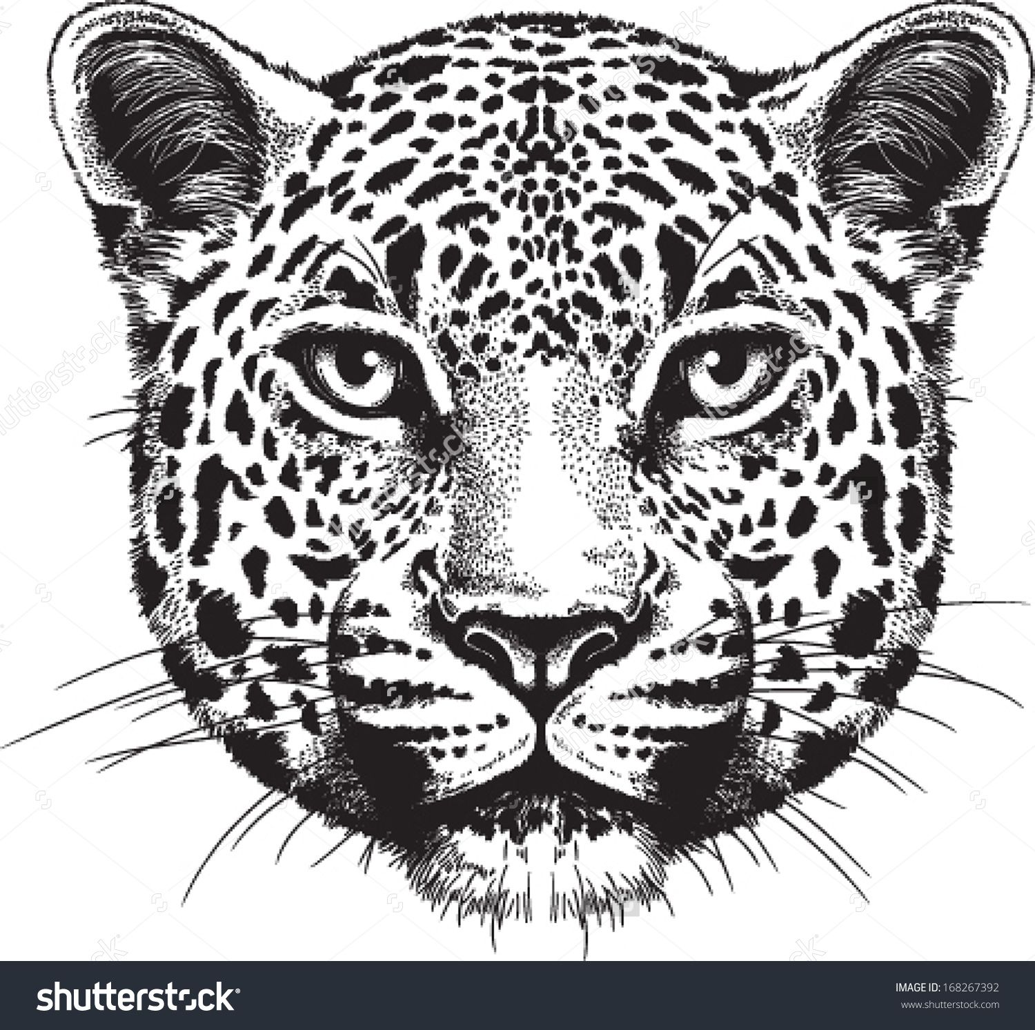Line Drawing Animal Face : Jaguar face drawing google search tatuaje pinterest