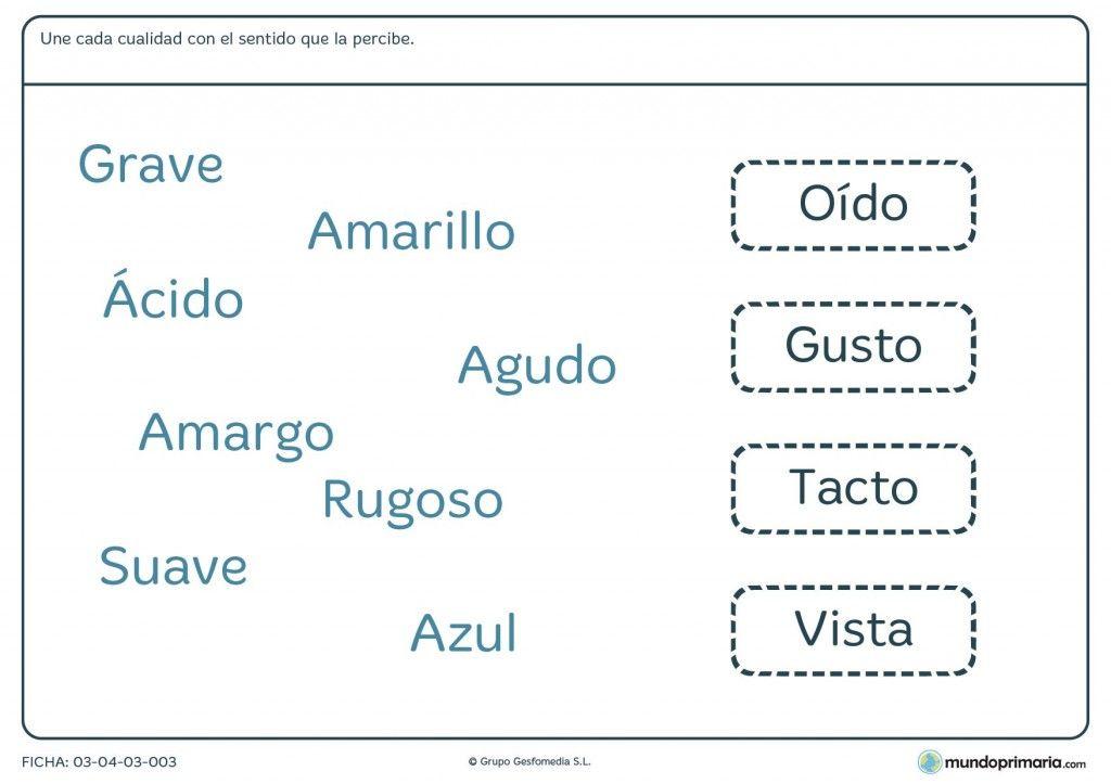Ficha de la percepción de los sentidos para primaria | RECURSOS. EL ...
