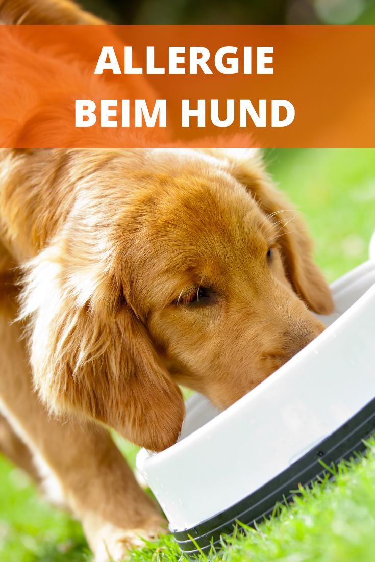 Futterallergie Beim Hund Ausschlussdiat Und Massnahmen Hunde