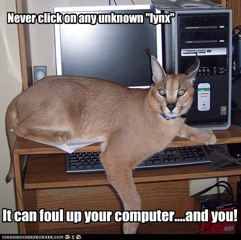 Internet Safety Tips Funny Animals Funny Cat Memes Cats