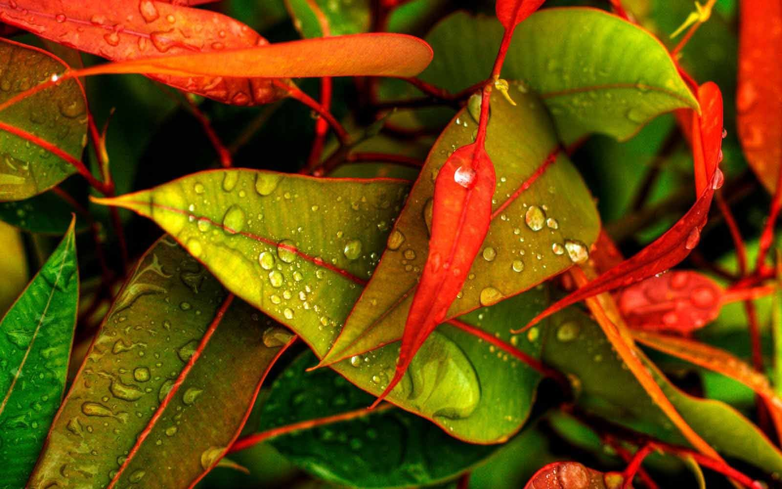 All New Hd Wallpaper High Quality Wallpapers Full Hd Wallpapers Green Leaf Wallpaper Leaf Wallpaper Water Drop On Leaf