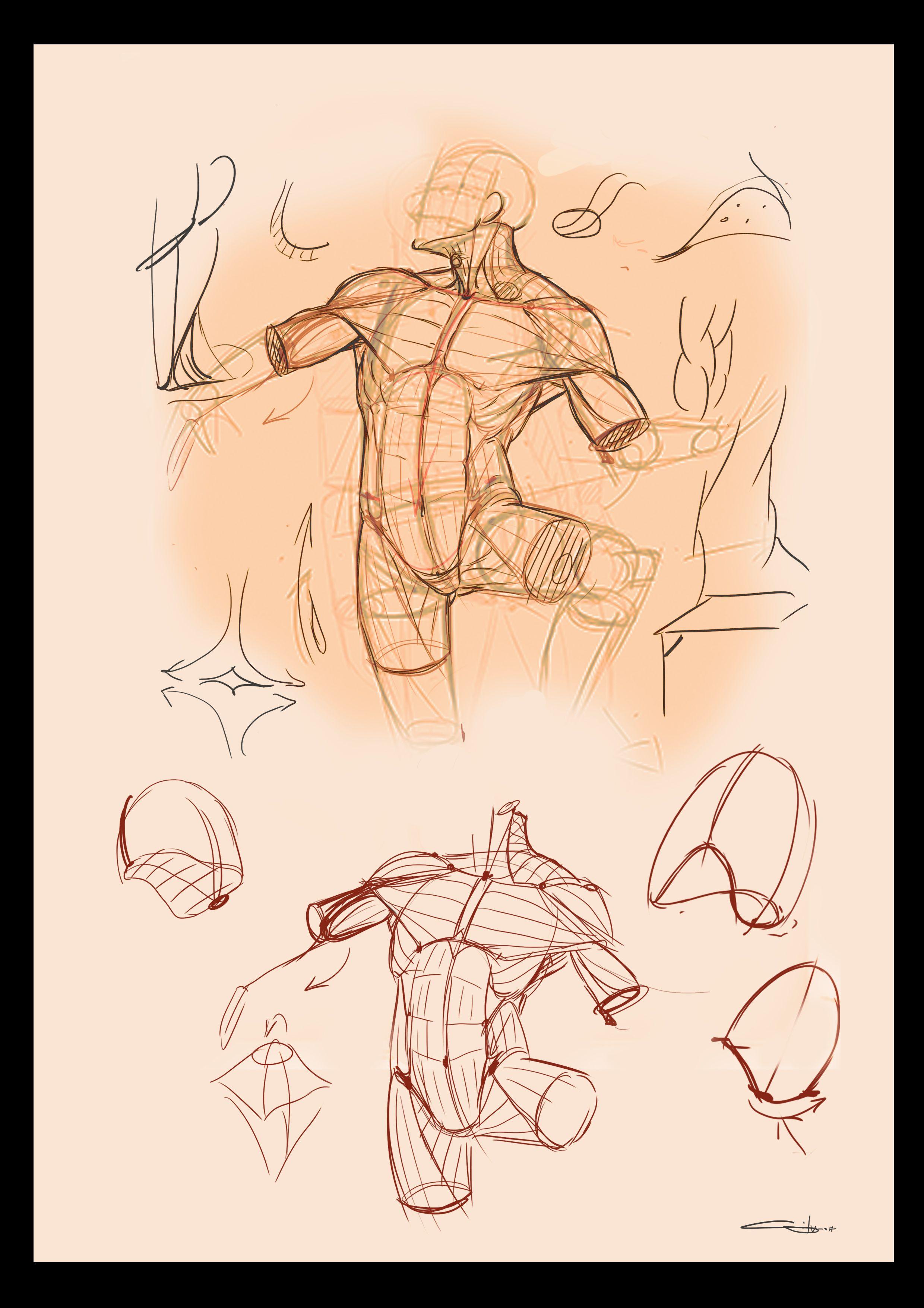 Pin von Wanit ChayaZin auf Anatomy   Pinterest