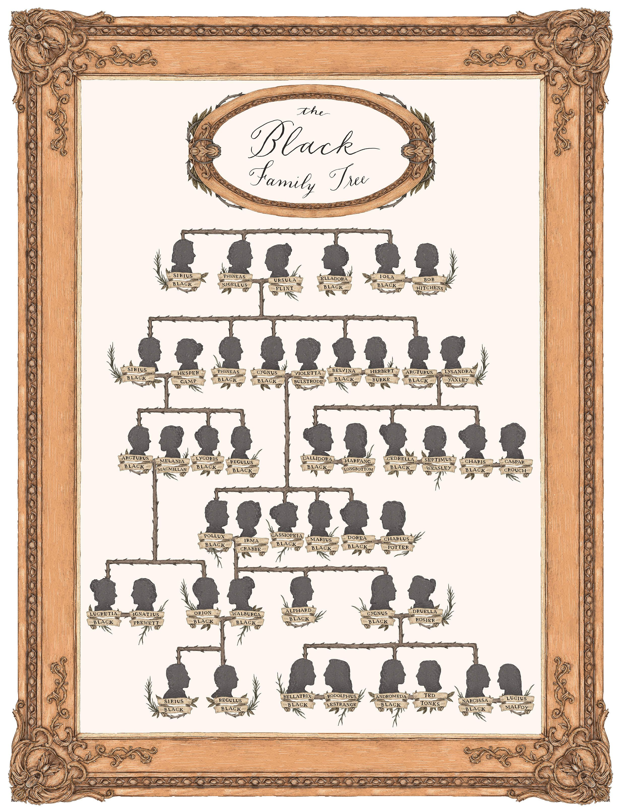 The Black Family Tree Harry Potter Family Tree Harry Potter Artwork Harry Potter Characters