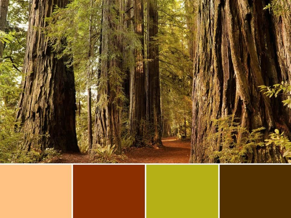 Pin By Hgtv On Travel Inspiration Nature Color Palette