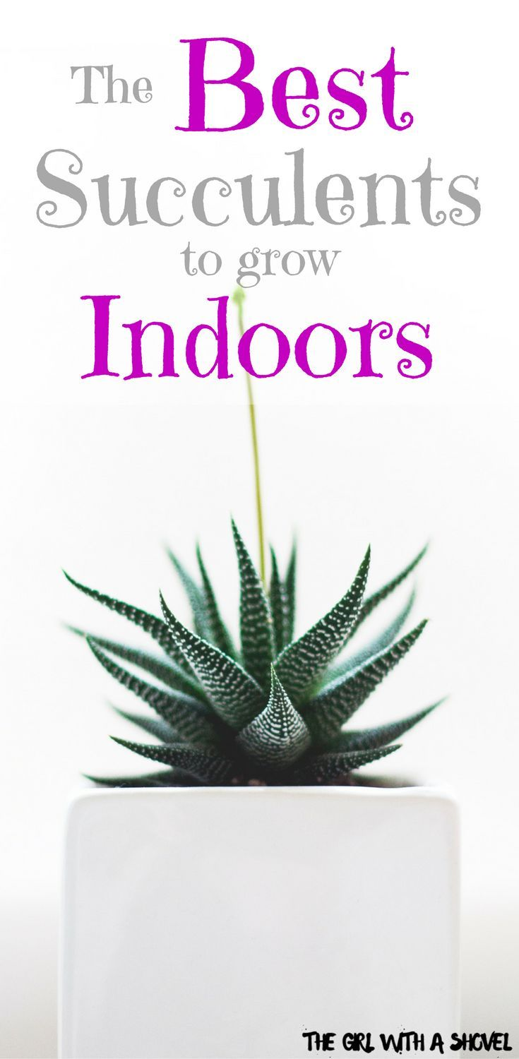 12 Easiest Succulents to Grow Indoors | The Girl with a Shovel