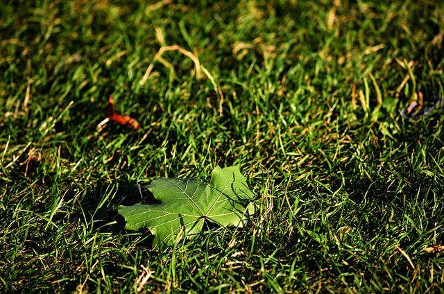 Blatt auf Rasen