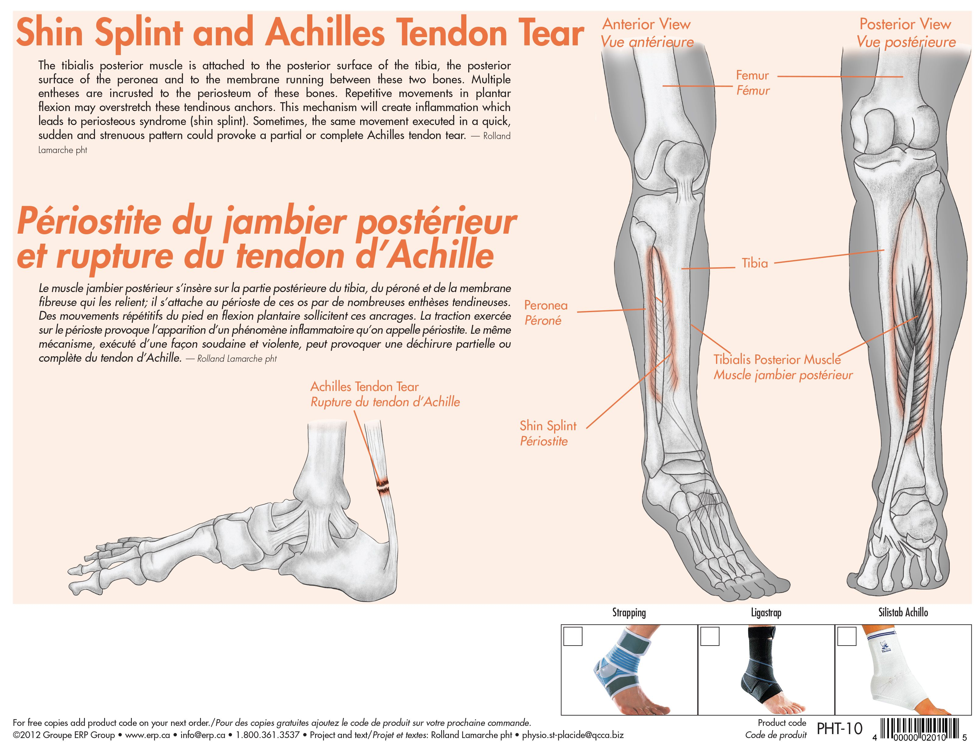 Achilles tendon rupture physical therapy - Shin Splint And Achilles Tendon Tear Sports Injuries Orthopedic Supports Www Erp