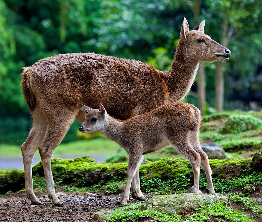 Doe and Fawn by Barker on 500px Animals, Cute