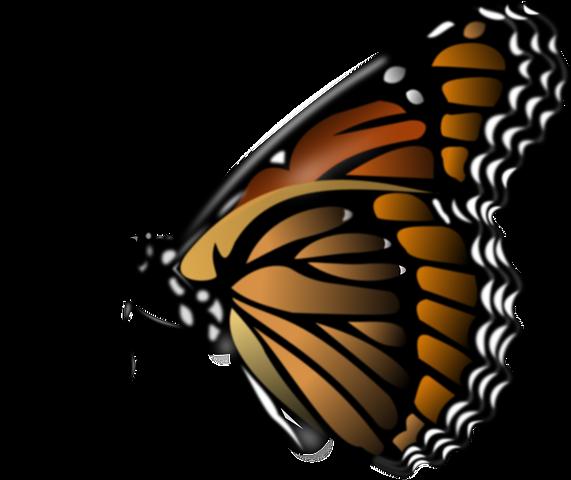monarch free vector art family nature club pinterest vector rh pinterest com