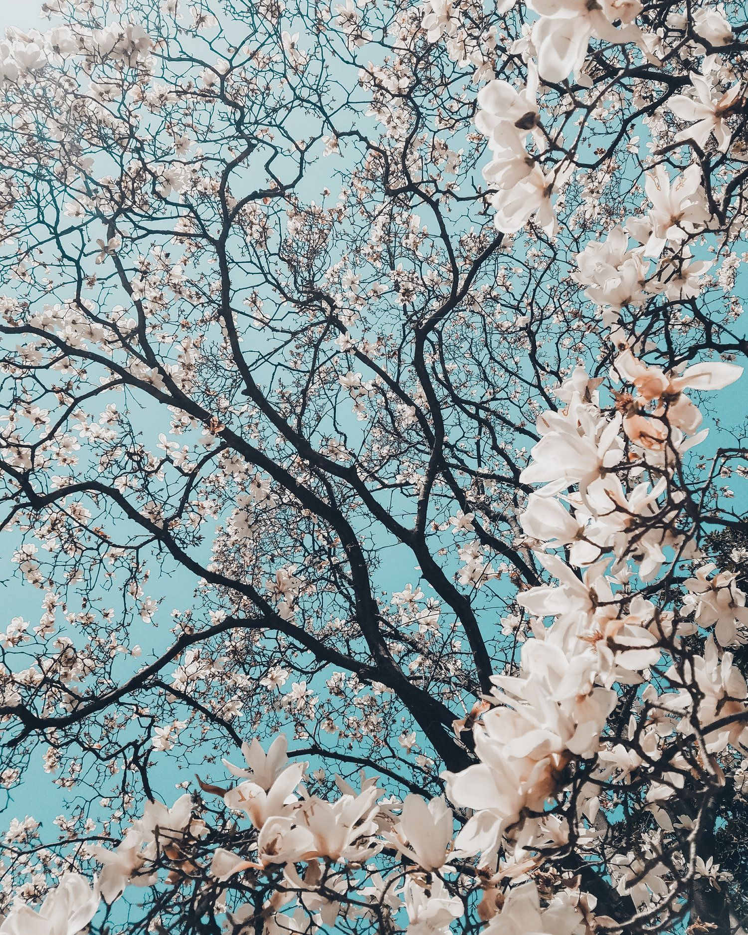 Self Care Tips For May Spring Landscape Photos Flower Pictures Spring Pictures