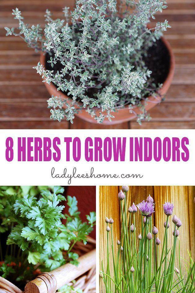 8 Herbs To Grow Indoors Herbs Indoors Growing Herbs 640 x 480
