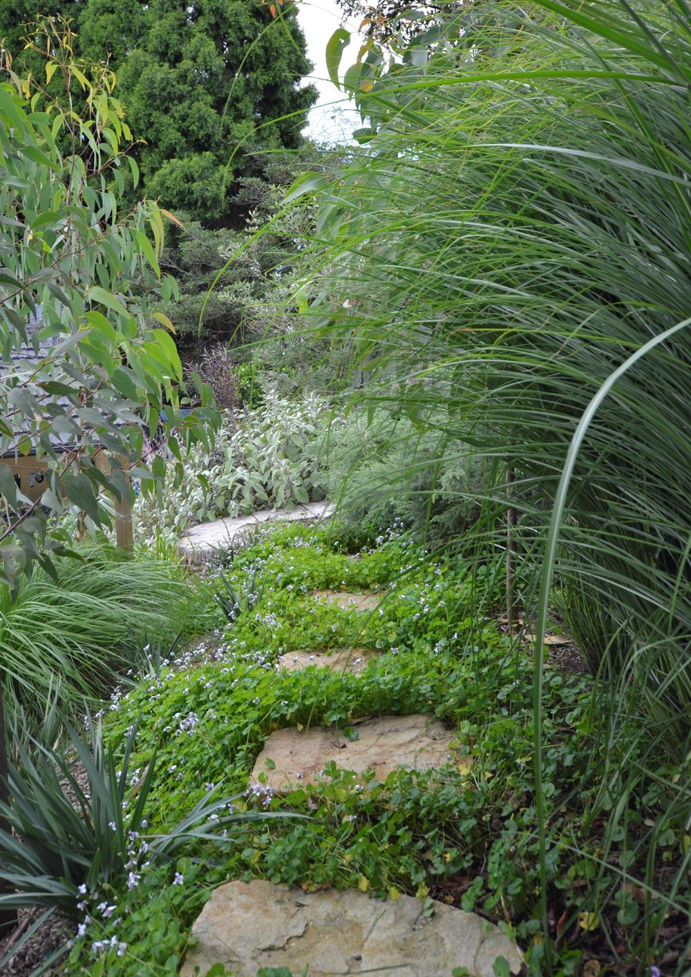 Plant Of The Month With Images Garden Plants Design