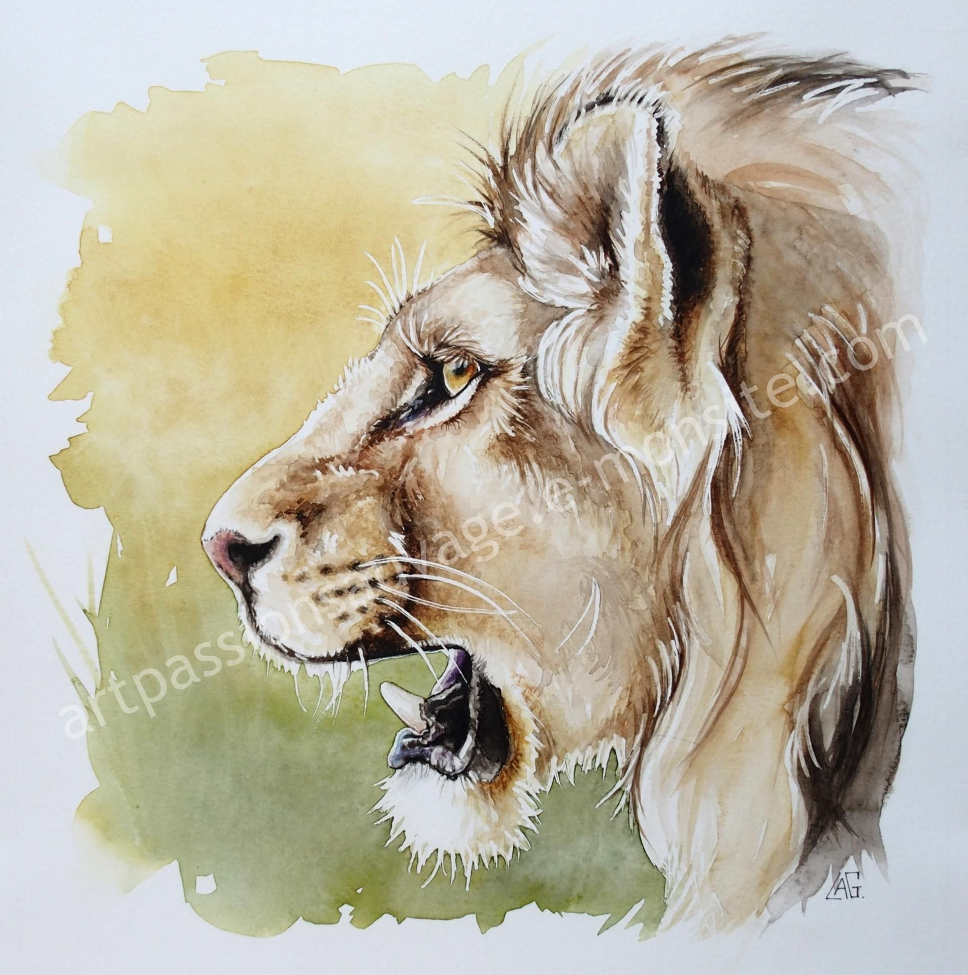 Dessin Facile A Refaire Aquarelles Animaux Aquarelle En 2019 Pinterest