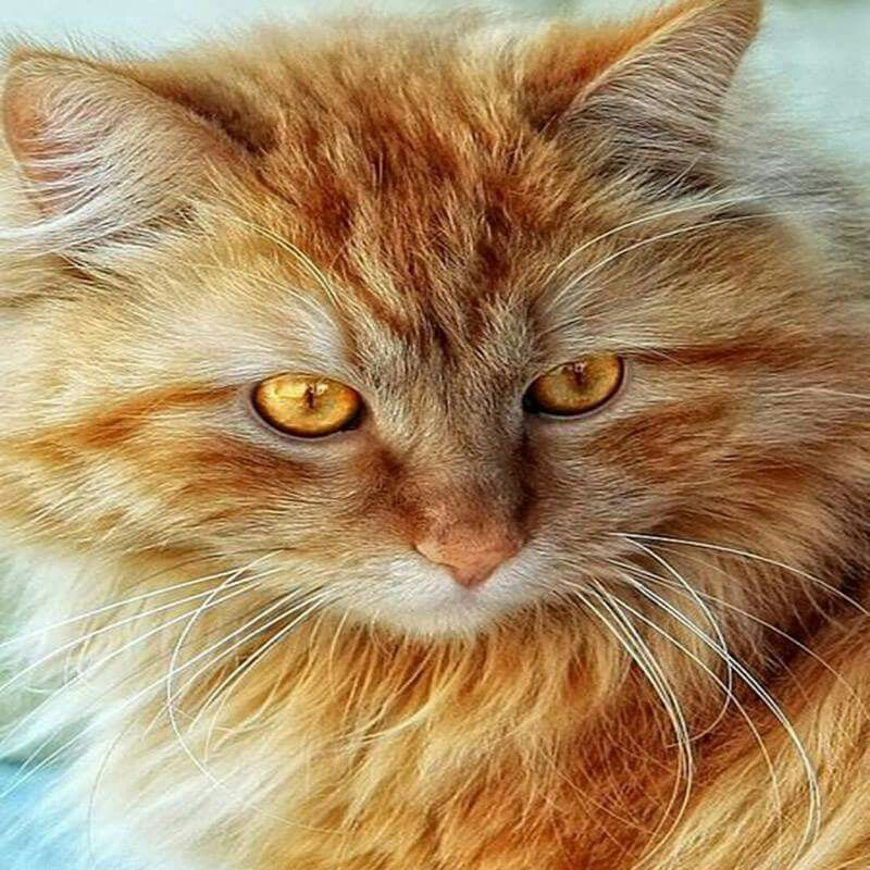 Pin by Lucia Victorica on Purring creatures Cats and