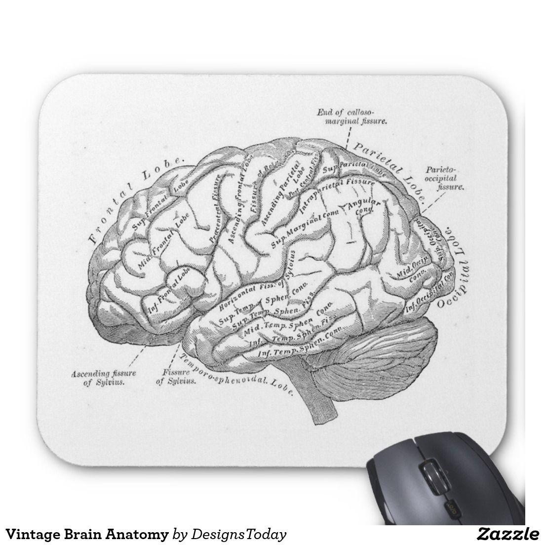Vintage Brain Anatomy Mouse Pad | Office Stuff | Pinterest | Brain ...
