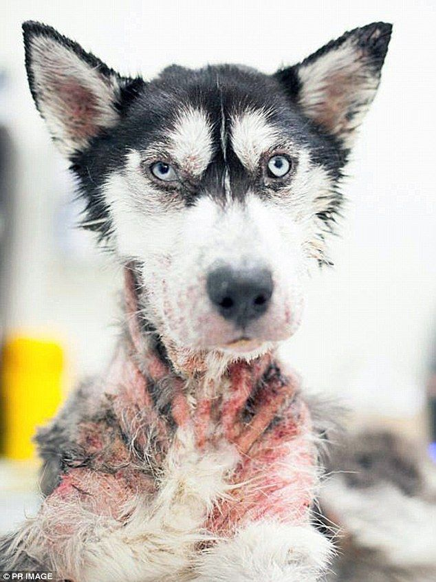 Dog Named Hero Extremely Underweight Injured And Diseased When