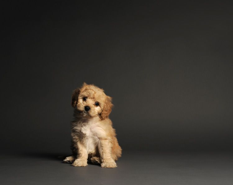 This Is Our Puppy Parker James Mccartney In This Photo He Is 7