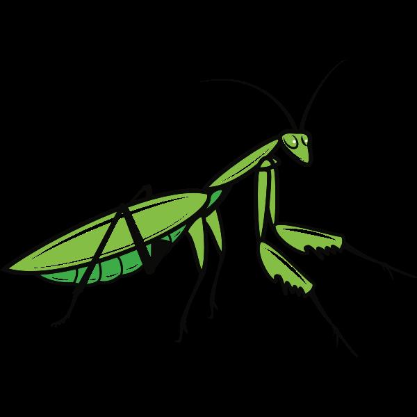 Praying Mantis Praying Mantis Pray Clip Art