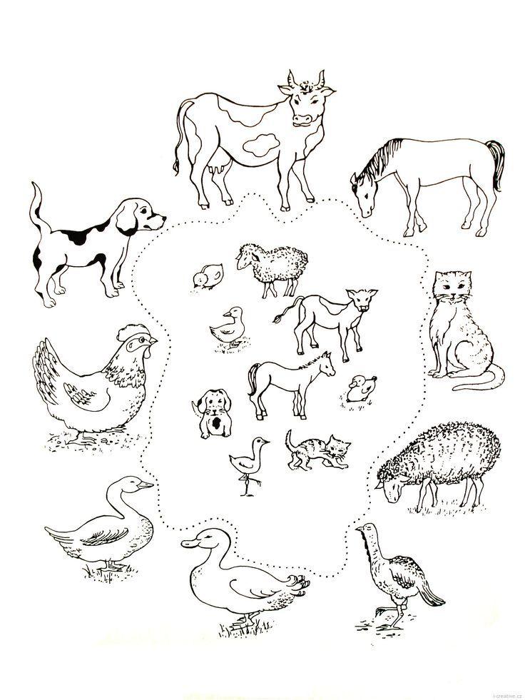 картинки задания детям по теме домашние животные водопады абхазии