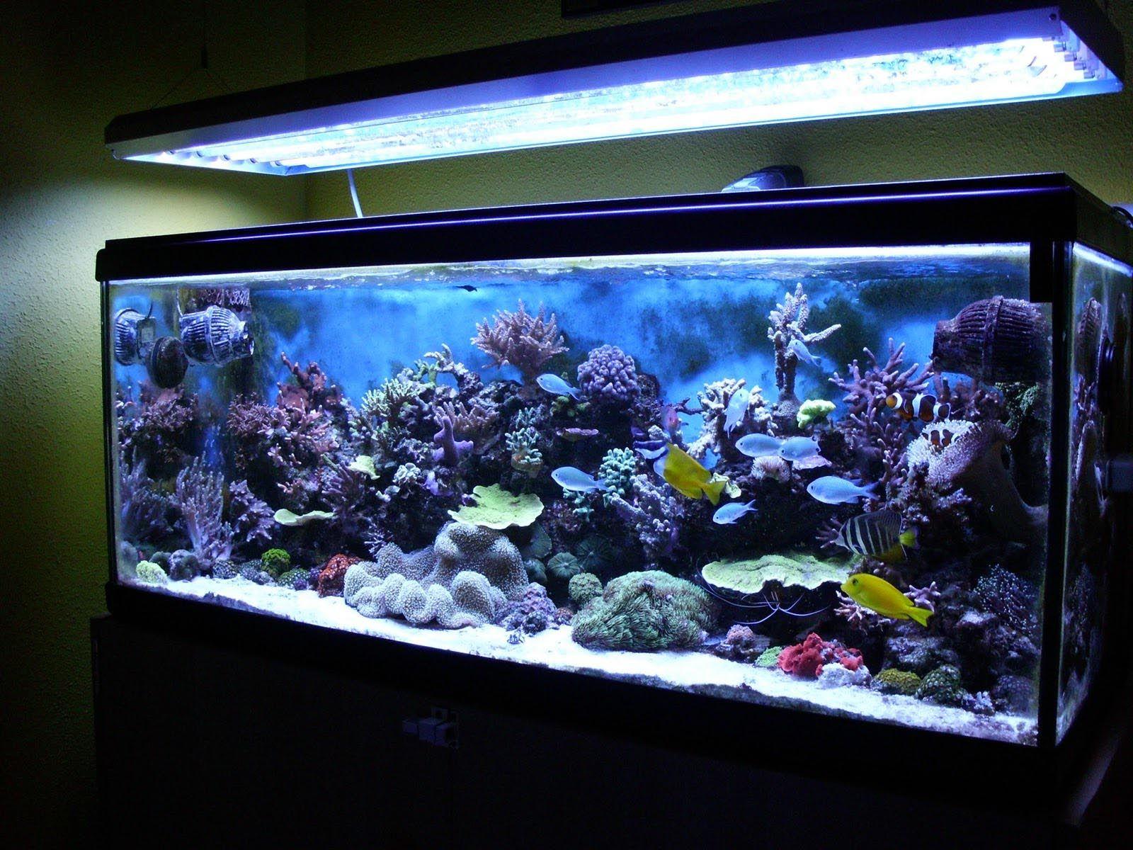 Tropical Freshwater Aquarium Fish patibility