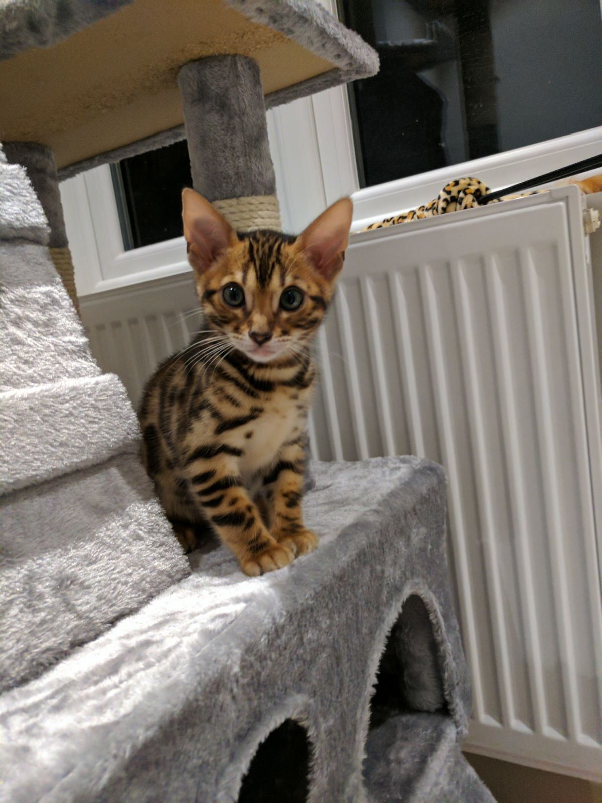 Got my first kitten today Get your Cute on cuteavalanche