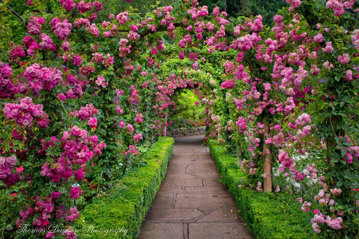 Butchart Gardens Rose Tunnel Full Blend 1 2 Fb Jpg 1200 800 Giardino