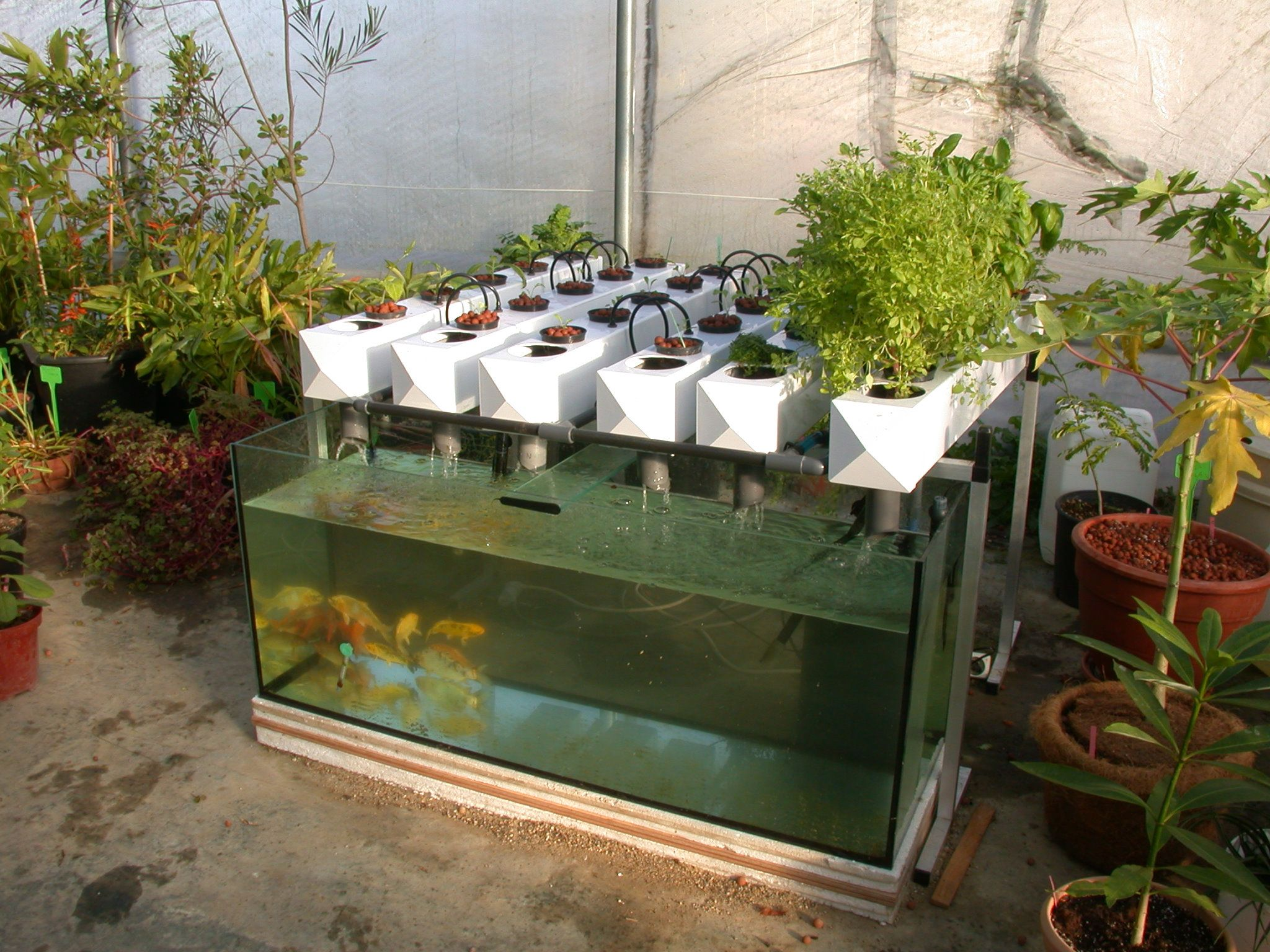 Aquaponics general hydroponics europe ghe official for Fish tank hydroponic garden