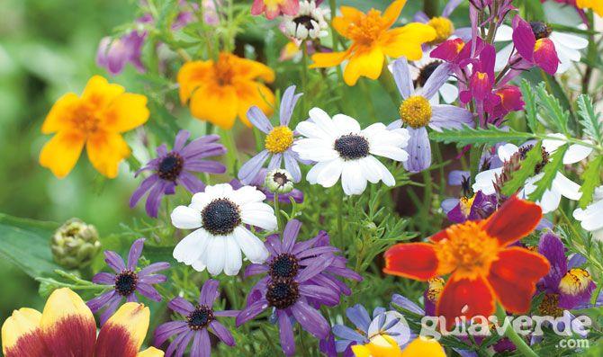 floresdeprimaveraverano Flores y Plantas Pinterest
