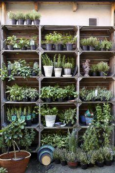 Estantera terraza para plantas aromticas con cajas de frutas