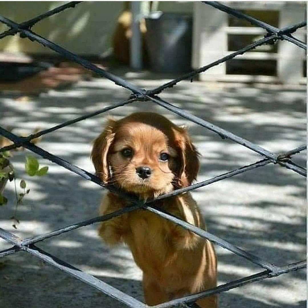 Waiting Mommy Back To Home Tag A Friend Puppies