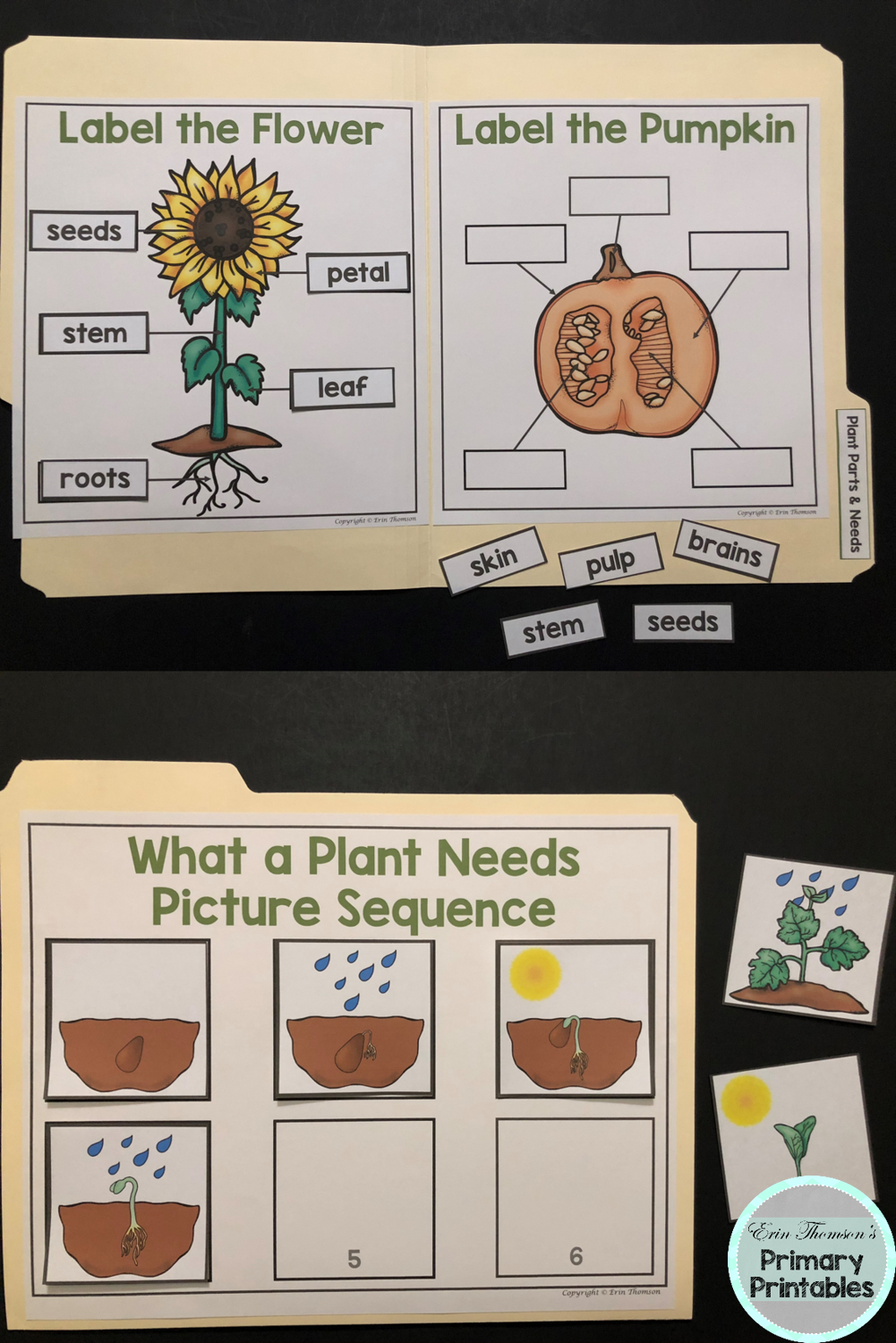 Science File Folder Activity Plant Parts And Needs Parts Of A Flower And Pumpkin File Folder Activities Parts Of A Plant Fun Worksheets For Kids [ 1500 x 1001 Pixel ]