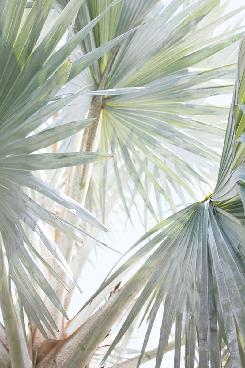 Color Palette: Minty Green | Erika Carlock | Bohemian Lifestyle Blog