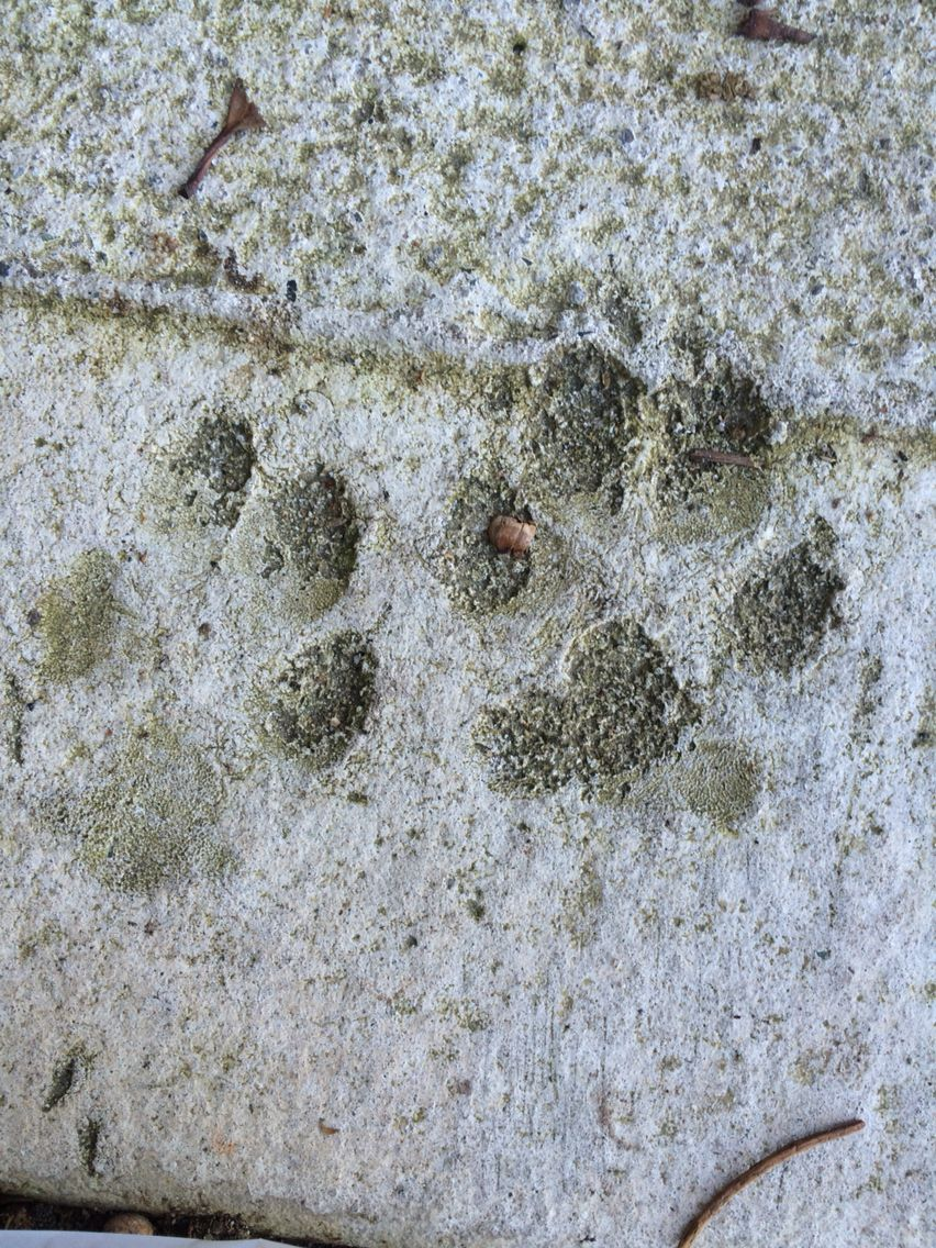 Paws in the concrete