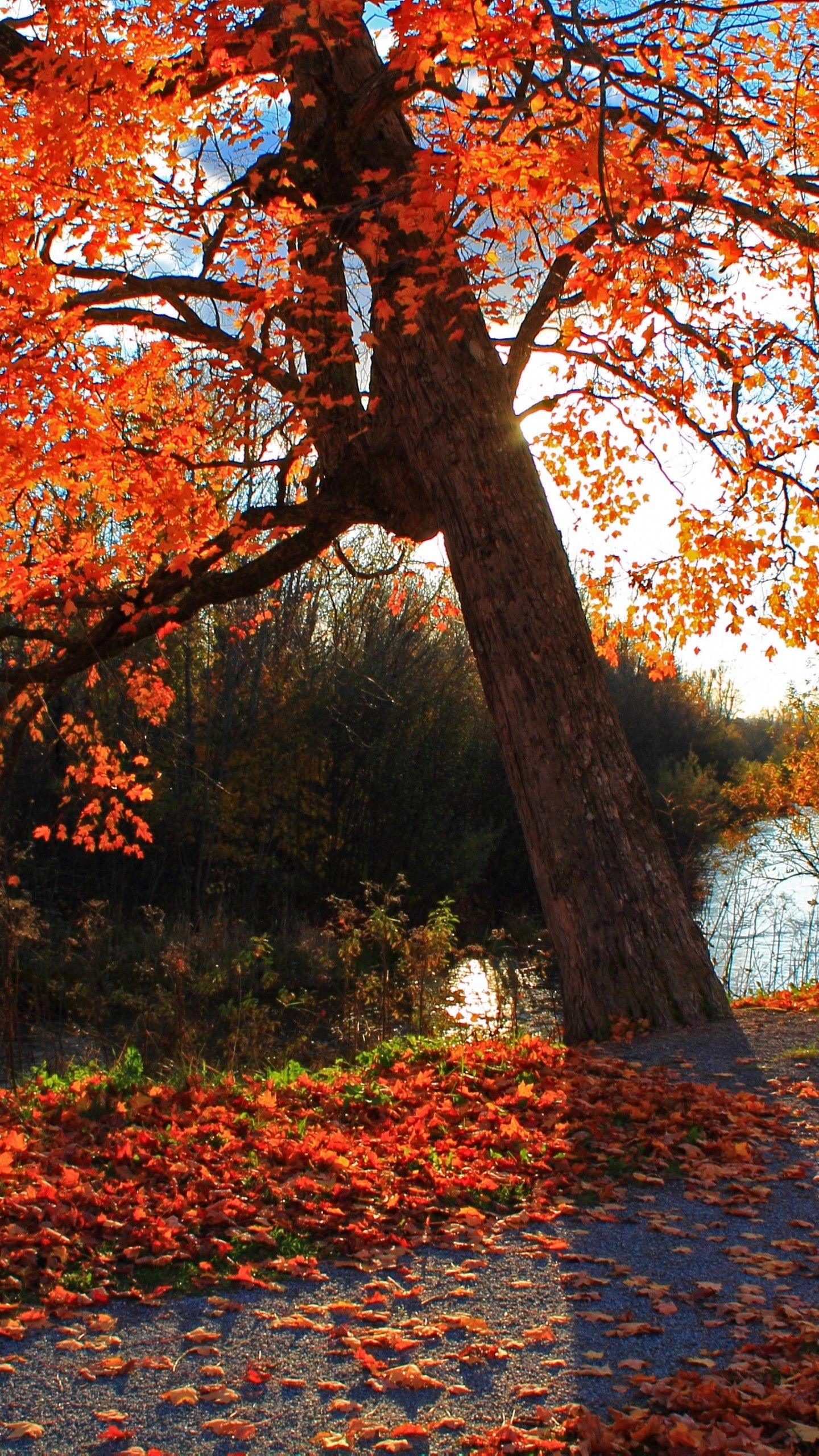 rusty red forest fall android wallpaper free download