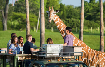 Is The Safari Included In Busch Gardens