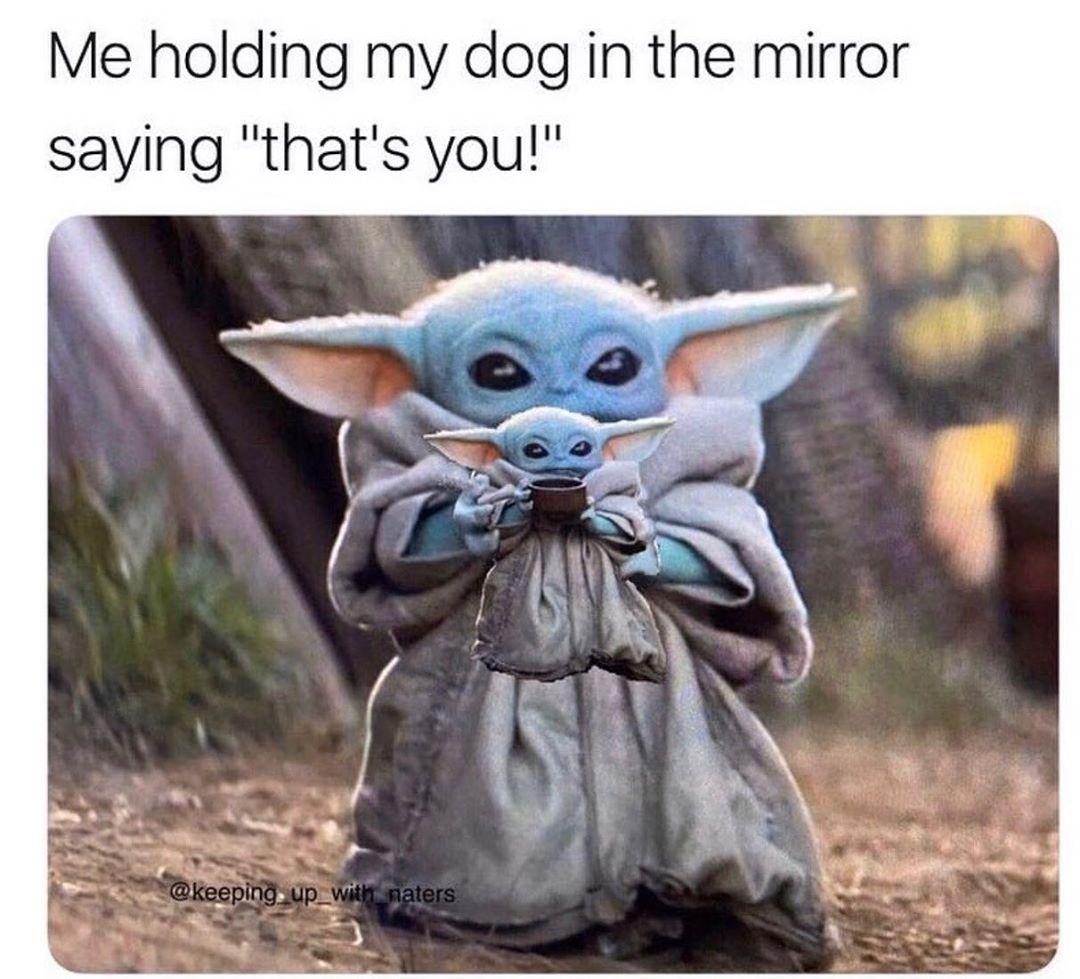 Hey There Poochy Babyyoda Babyyodameme Babyyodamemes Babyyodamemesfordays Bbyyoda Yoda Memes Meme Memes Funny Meme Yoda Meme Star Wars Memes Yoda