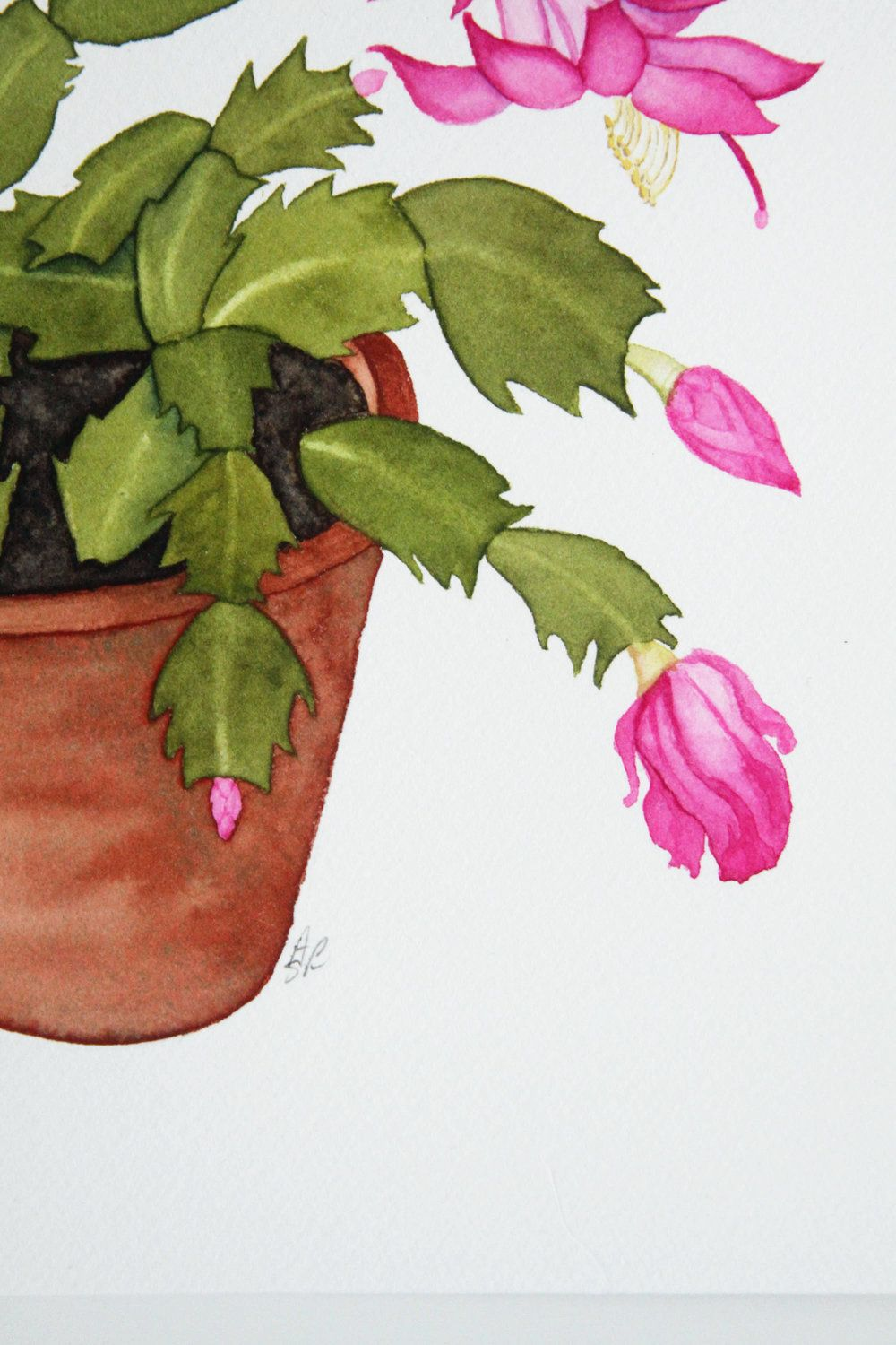 Christmas Cactus In A Clay Pot Watercolor Painting Aquarelle
