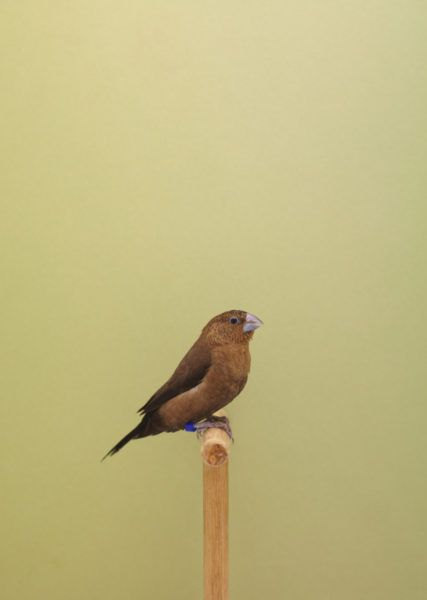 Show Birds and colour blocking - The Chromologist